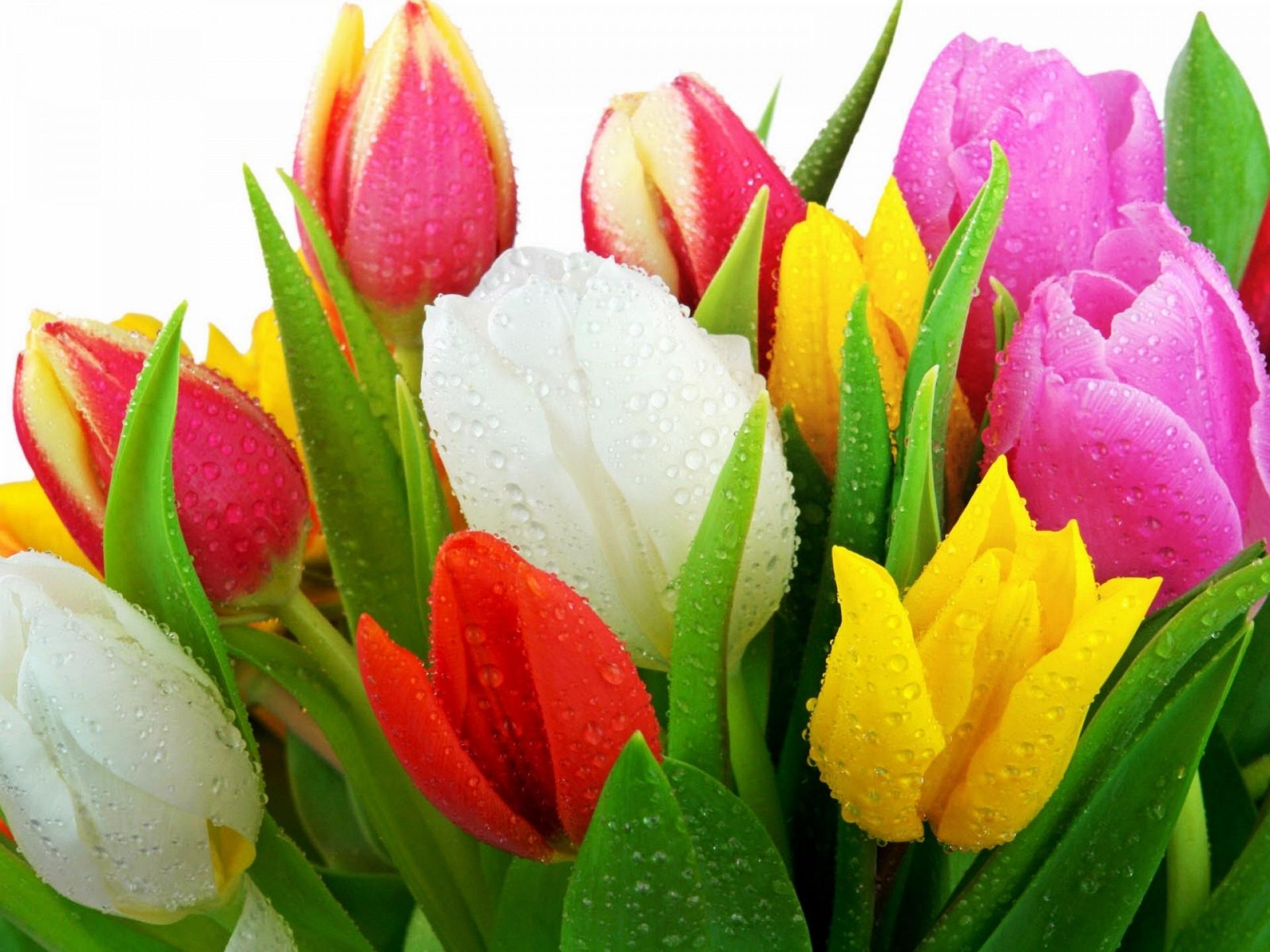 Оформление корзин с цветами и фруктами